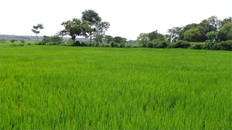 pros of buying agriculture land in alwar delhi NCR